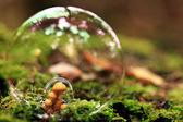 Macro moss — Stock Photo