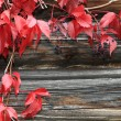 Stock Photo: Red vine leaves
