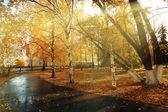 осенний парк — Стоковое фото