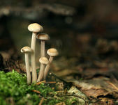 Poisonous mushrooms unusual — Stock Photo