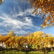 Autumn sky branch — Stock Photo #34903975