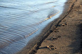 Seashore sand beach — Stock Photo