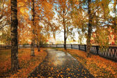 Autumn park with yellow leaves — Stock Photo