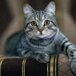 Funny gray cat on a sofa — Stock Photo #34912011