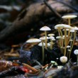 Stock Photo: Tiny mushrooms toadstools