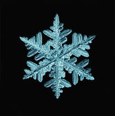 Snowflake isolated — Stock Photo