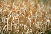 Grass autumn landscape — Stock Photo