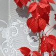 Stock Photo: Red vine leaves on wall