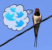 Swallow on a wire — Stock Photo