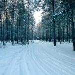 forêt d'hiver magique — Photo