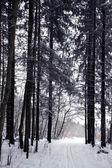 Ormanda iz — Stok fotoğraf