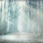 Mystical forest fog — Stock Photo #47588709