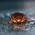 Water beetle — Stock Photo #47589247
