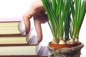 Trappor av hand och bok — Stockfoto