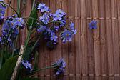 Forgetmenots flowers — Stock Photo