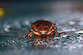 Water beetle — Stock Photo