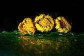 Flor amarilla sobre la superficie del agua — Foto de Stock