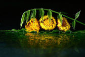 Yellow flower on water surface — Stock Photo