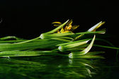 Small bouquet in water — Stock Photo