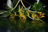 Yellow flowers reflected in water — Stock Photo
