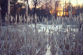 Winter sunset on the marsh — 图库照片