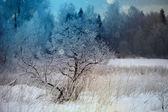Árboles de la nieve de invierno — Foto de Stock