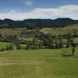 New Zealand rural scene — Stock Photo