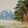 Stock Photo: Morning forest