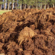 Stock Photo: Farm manure
