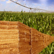 Agriculture — Stock Photo #22220283