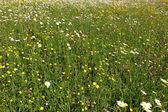 Campo de flores — Fotografia Stock