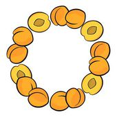 Delicious ripe apricots isolated on white background colorful fruit decorative wreath — Stock Vector