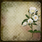 The branch of roses on a vintage background — Photo