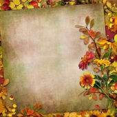 Autumn leaves, flowers and berries on a vintage background — Stock Photo