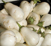 White Eggplants — Foto de Stock