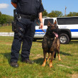 Stock Photo: K-9 Police Dog