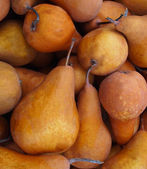Bosc Pears — Stock Photo