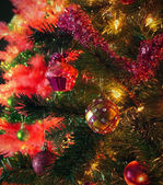 Elegante rosa navidad — Foto de Stock