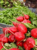 Ravanelli presso l'agricoltore — Foto Stock