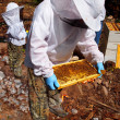 The Beekeepers — Stock Photo #26107209