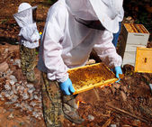 The Beekeepers — Stock Photo