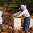 Stock Photo: Beekeepers Tending Hive