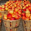 Foto Stock: Nectarines in Bushels