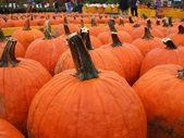 Pumpkin Shopping In October — Stock Photo