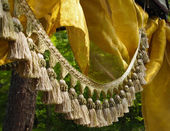 Střapec třásně a hedvábí v lese — Stockfoto