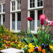 Traditional house with tulip garden — Stock Photo