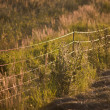 Electrical fence — Stock Photo