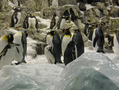 Pinguins in Loro Parque — Stock Photo
