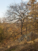 Autumn scene from Prague — Foto de Stock