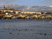 Scenic view of the Prague Castle — Stock fotografie